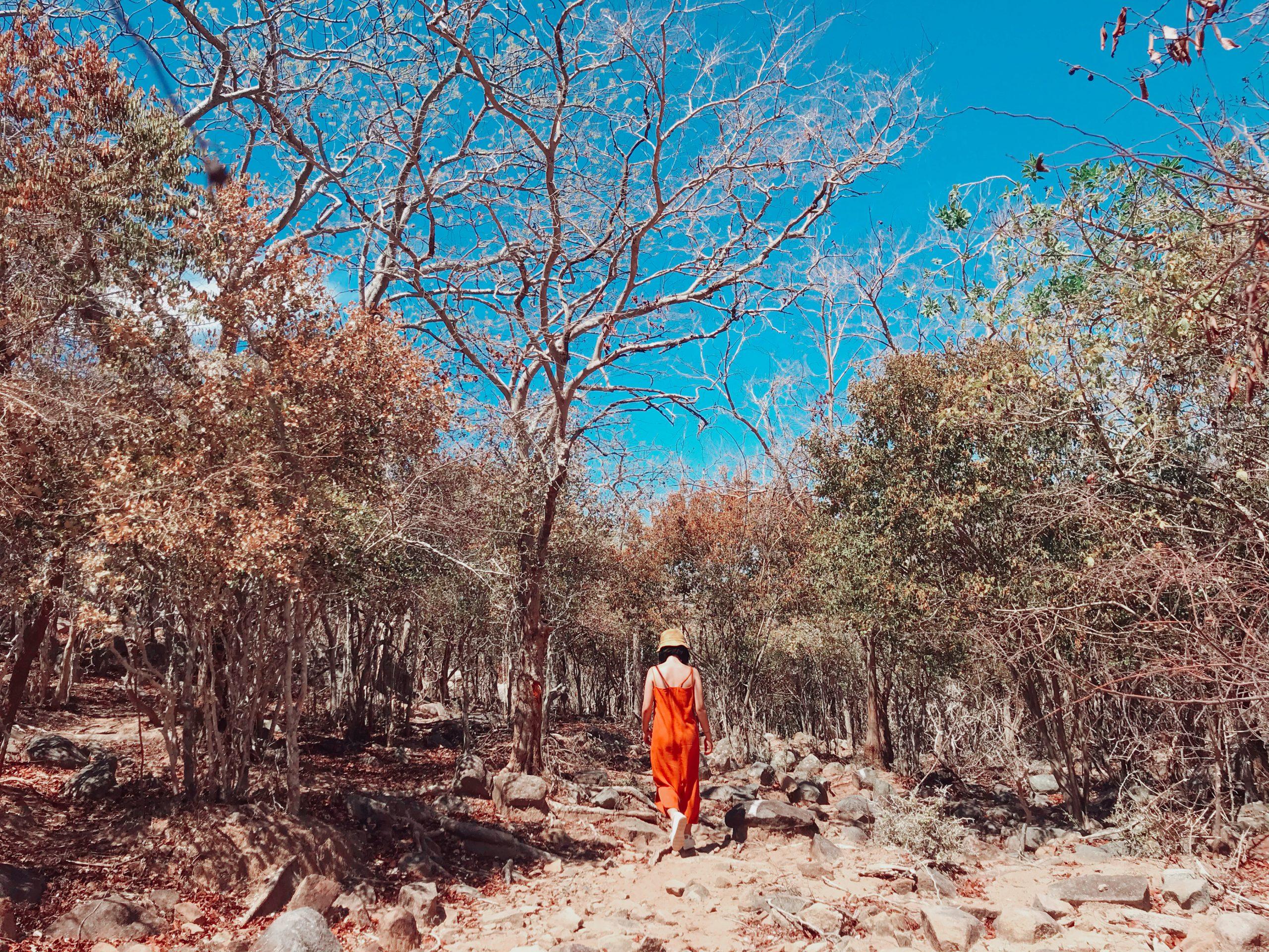 Rừng khô cạn núi chúi Ninh Thuận