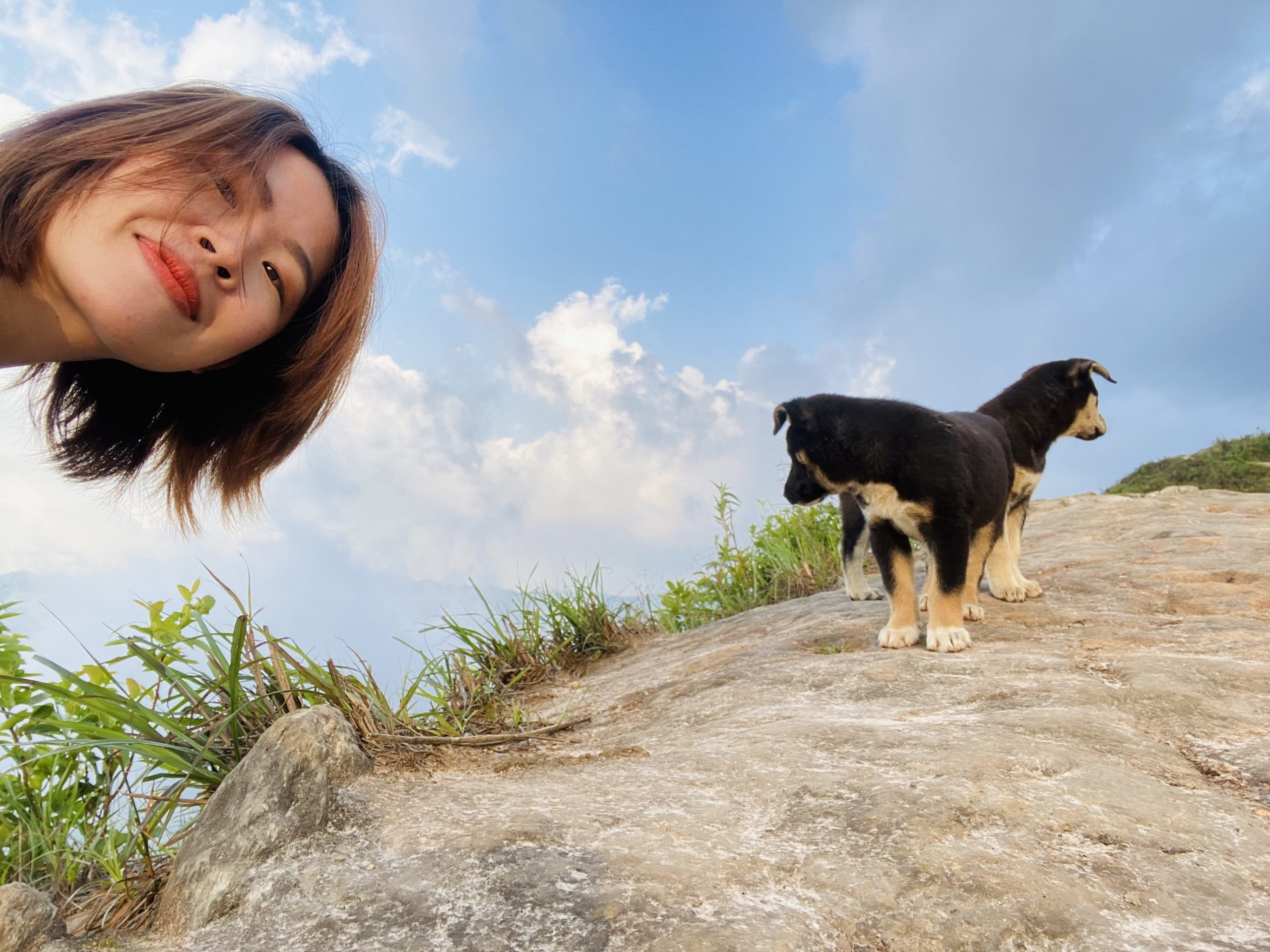 Những người bạn cún đáng yêu